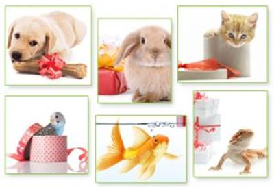 Zooplus Geschenkgutscheine